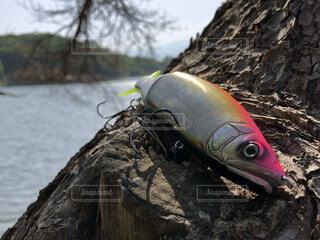 Big baitの写真・画像素材[3742342]