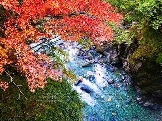 紅葉と川の流れの写真・画像素材[3710057]