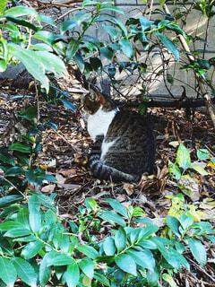 葉っぱの上に座っている猫の写真・画像素材[3707583]