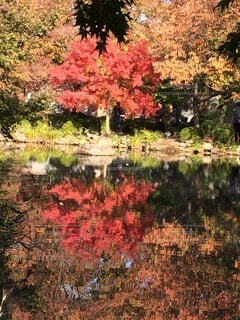 水鏡と紅葉の写真・画像素材[3712727]
