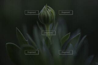 花のクローズアップの写真・画像素材[3722841]
