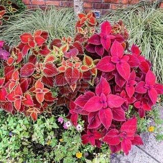 赤色の花の写真・画像素材[3709040]