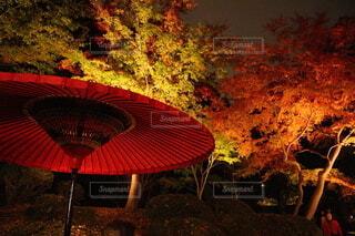 夜の紅葉の写真・画像素材[3722718]