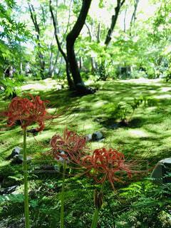 初秋の草木と彼岸花の写真・画像素材[3709699]