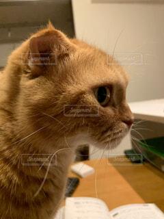 愛猫の写真・画像素材[3719421]