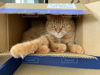 愛猫の写真・画像素材[3719439]