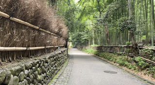 誰もいない嵐山竹林の写真・画像素材[3712017]