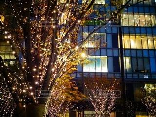 夜,屋外,樹木,クリスマス,照明,明るい,グランフロント大阪,グランフロントクリスマス