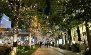 夜,綺麗,イルミネーション,キラキラ,クリスマス,装飾,グランフロント大阪,シャンパンゴールド,シャンパンゴールドイルミネーション,グランフロントクリスマス