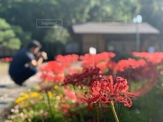 花のクローズアップの写真・画像素材[3712168]