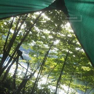 森の中で感じる朝の目覚めの写真・画像素材[3712544]