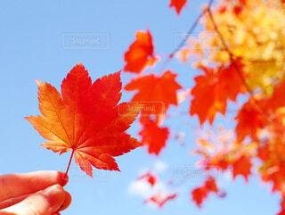 秋、見つけたの写真・画像素材[3797379]