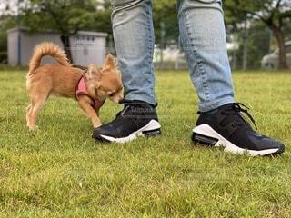 犬の写真・画像素材[3714865]