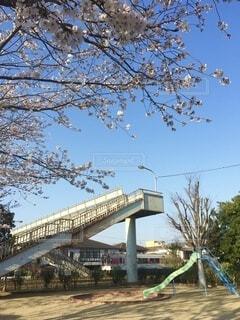 桜と電車の写真・画像素材[3715740]