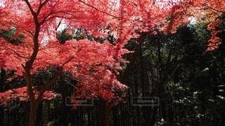 森の中の木の写真・画像素材[3854130]