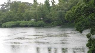 雨の公園の写真・画像素材[4564906]