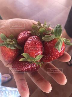 摘みたての苺を持つ手の写真・画像素材[3720370]