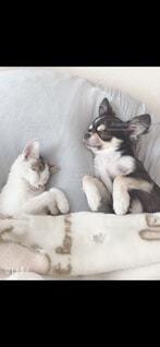 ベッドに横たわっている犬の写真・画像素材[3720156]