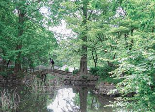 公園の新緑と水辺の写真・画像素材[4410176]