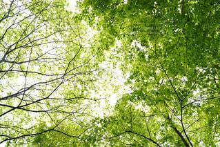 新緑の森の写真・画像素材[4445044]