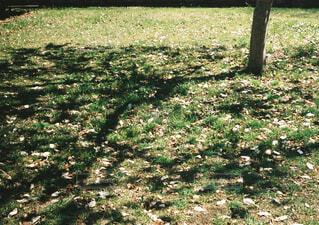 新緑の季節の木漏れ日の写真・画像素材[4445053]