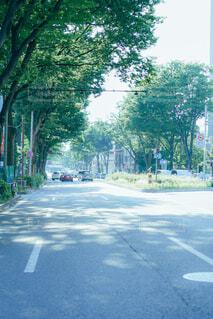 道路の木漏れ日の写真・画像素材[4460890]