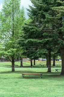 木々の中にあるベンチの写真・画像素材[4460900]
