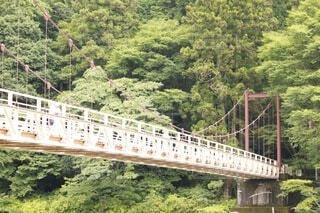 森の川に架かる橋の上の写真・画像素材[3758617]