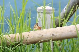蝶の写真・画像素材[3758618]