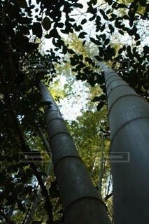 森の中のの写真・画像素材[3758628]