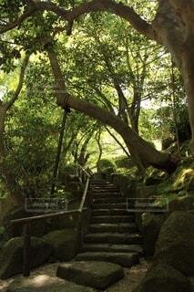 緑道の階段の写真・画像素材[3758630]