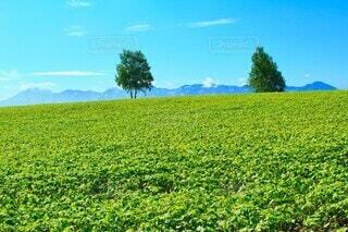 初夏の草原の写真・画像素材[3728125]
