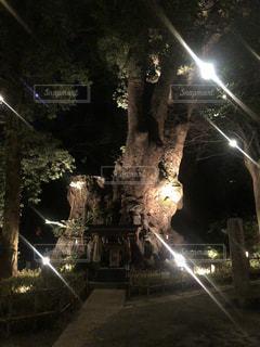 夜にライトアップされた来宮神社の写真・画像素材[1036651]