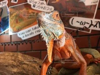 爬虫類のクローズアップの写真・画像素材[3730137]