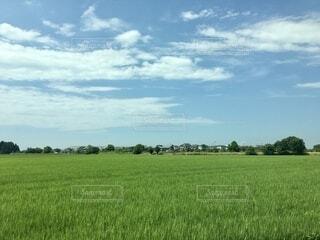 緑豊かな畑のクローズアップの写真・画像素材[3798289]