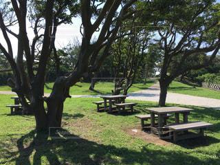公園の写真・画像素材[169086]