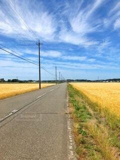 田舎の一本道、青空の下麦刈りがもうすぐ!の写真・画像素材[3798887]