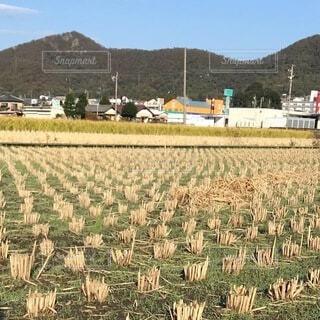 秋の田んぼの写真・画像素材[3735474]