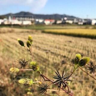 秋の田んぼの写真・画像素材[3735479]