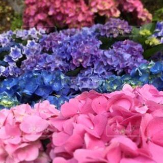 花のクローズアップの写真・画像素材[3735491]