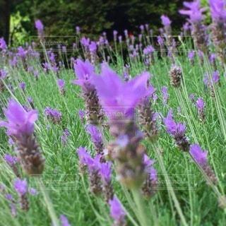 花のクローズアップの写真・画像素材[3735500]