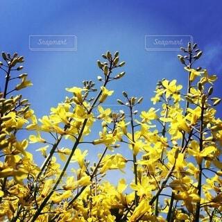 黄色い花の写真・画像素材[3735492]