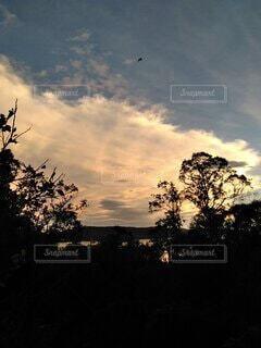 木の上 空高く飛ぶ鳥の写真・画像素材[3769349]