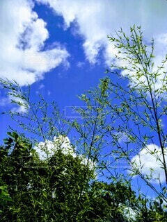 木のクローズアップの写真・画像素材[3781232]