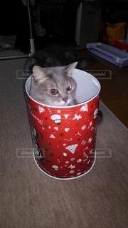 クリスマス猫の写真・画像素材[3736290]