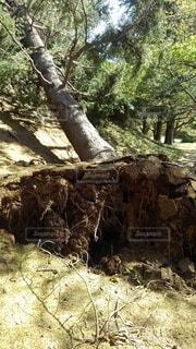 木のクローズアップの写真・画像素材[3736293]
