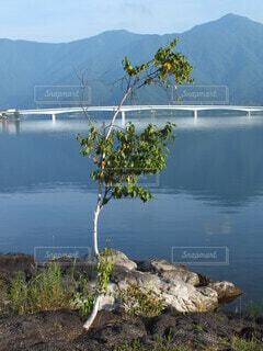 湖のほとりの写真・画像素材[3790572]