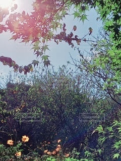 茂みの秋空の写真・画像素材[3799027]