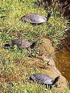 草の中に横たわるカメの写真・画像素材[3799032]