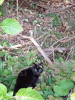 森の迷い猫の写真・画像素材[3799180]